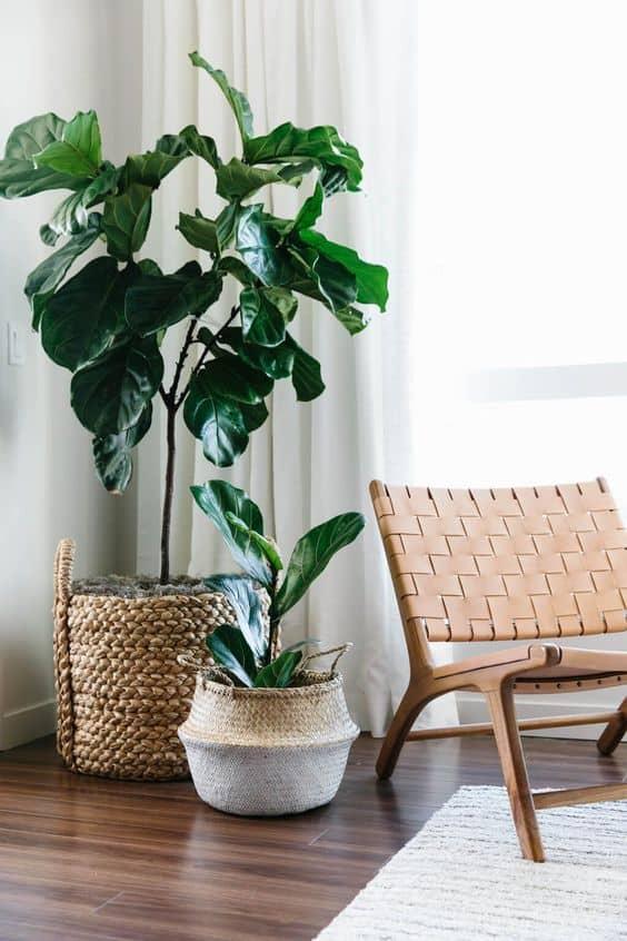 interior trends 2021 indoor plants